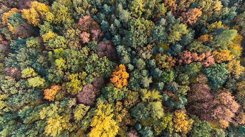 Veduta aerea del bosco in autunno sul Montello
