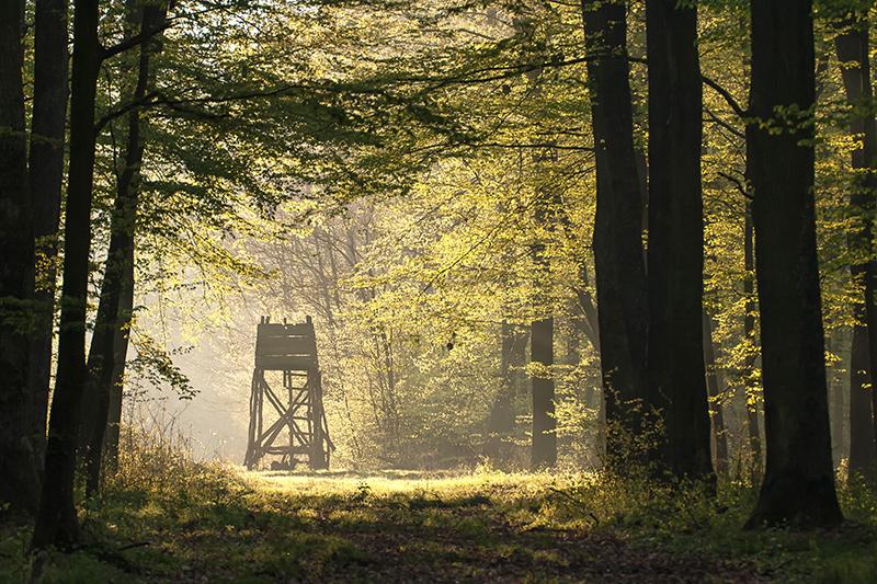 Un capanno da caccia nel fitto del bosco
