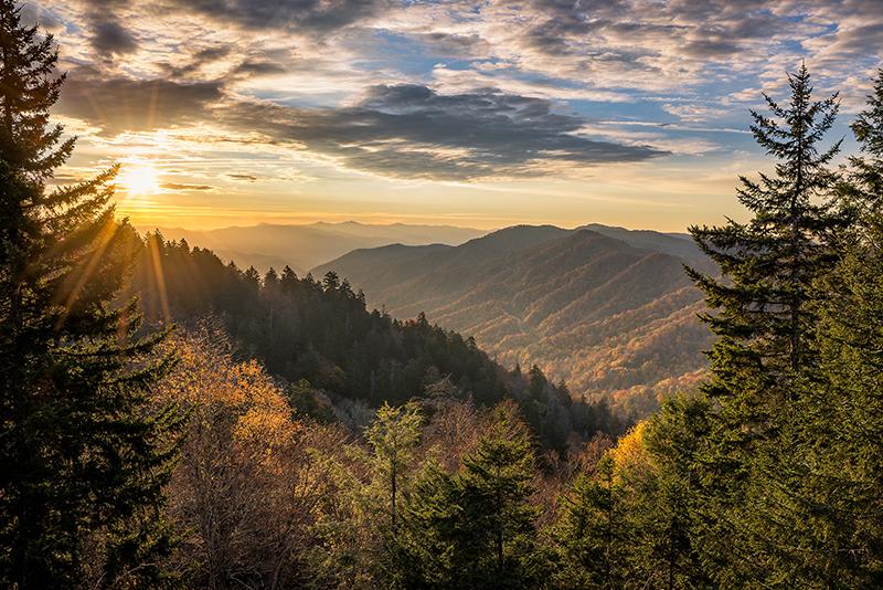Foto con paesaggio di un bosco del Montello