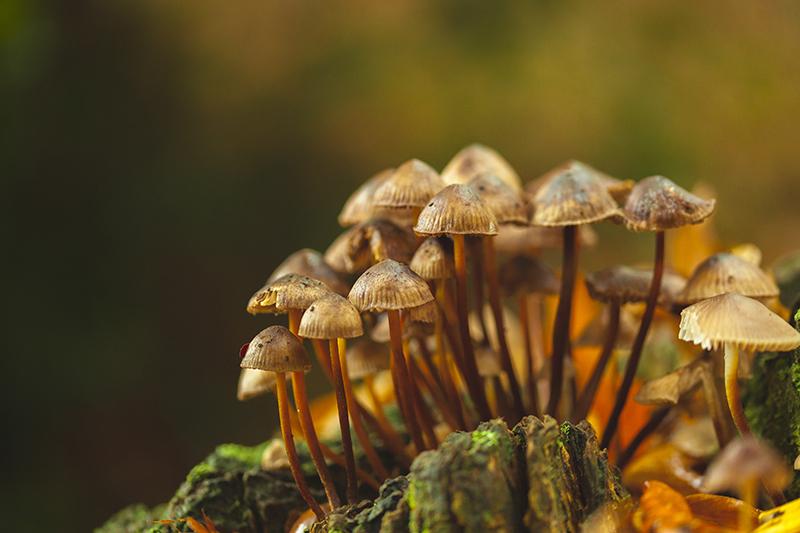 Ceppo di funghi in un bosco